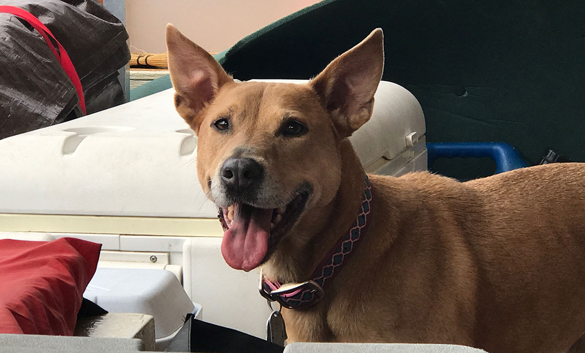 Dog named Tula riding on the River Record Adventure boat with Marc Phelps